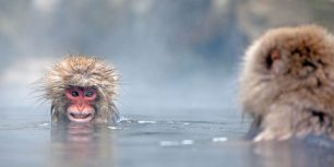 Japanese macaques in a hot spring, Jigokudani Monkey Park, Japan (© Per-Gunnar Ostby/Getty Images)