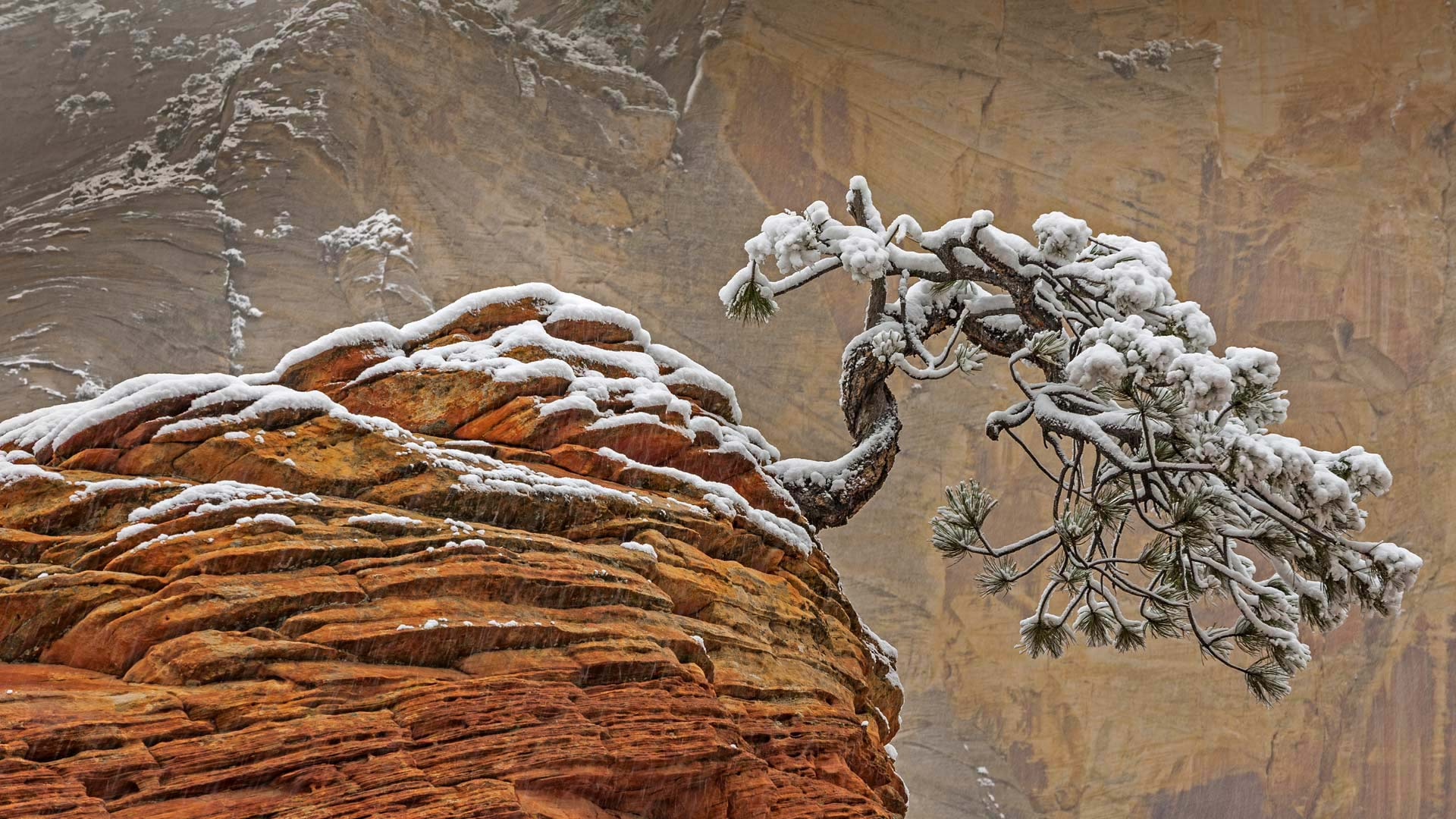 Snow in Zion National Park, Utah