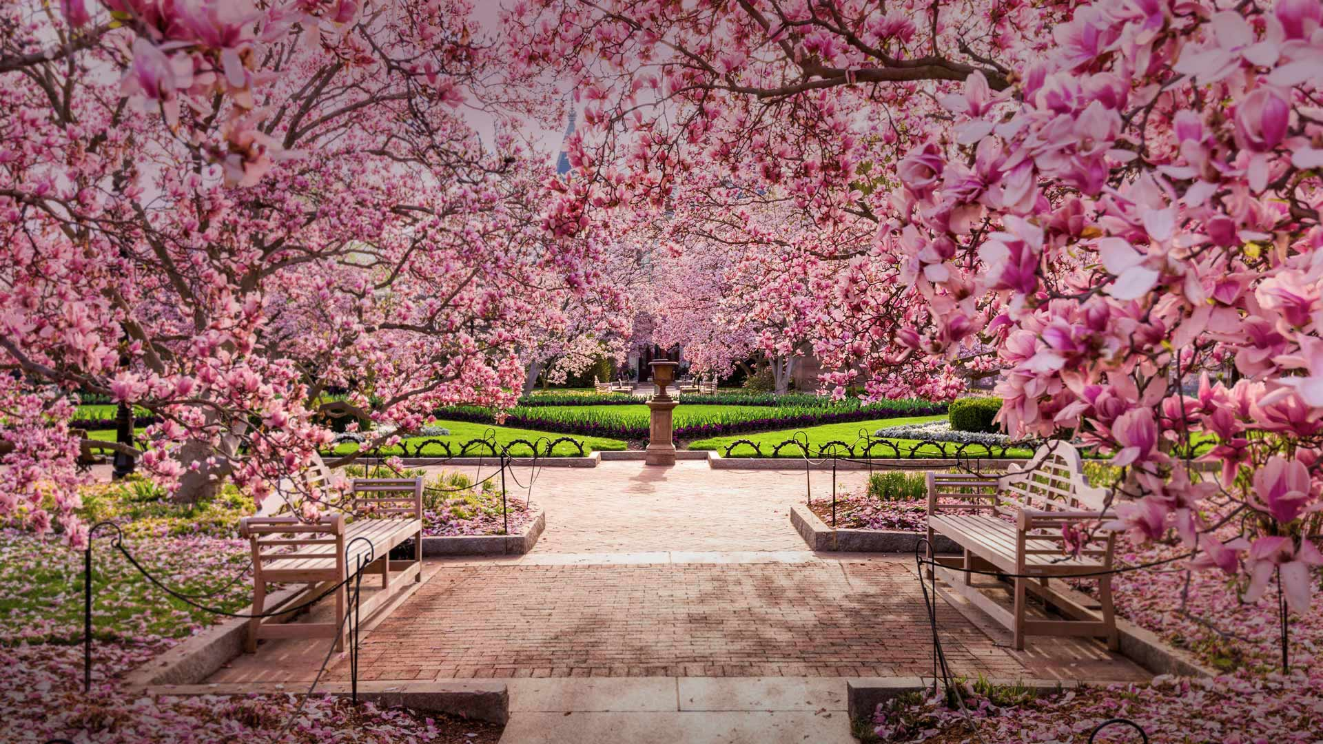 Cherry blossoms at the National Mall, Washington, DC (© Sean Pavone/Alamy)
