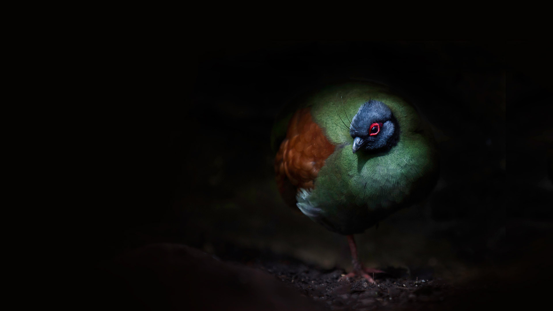 A crested partridge (© Sue Demetriou/Offset)