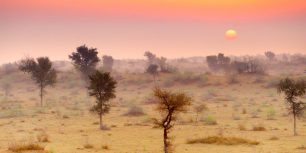 Thar Desert near Jaisalmer, Rajasthan, India (© Jan Wlodarczyk/Alamy Stock Photo)