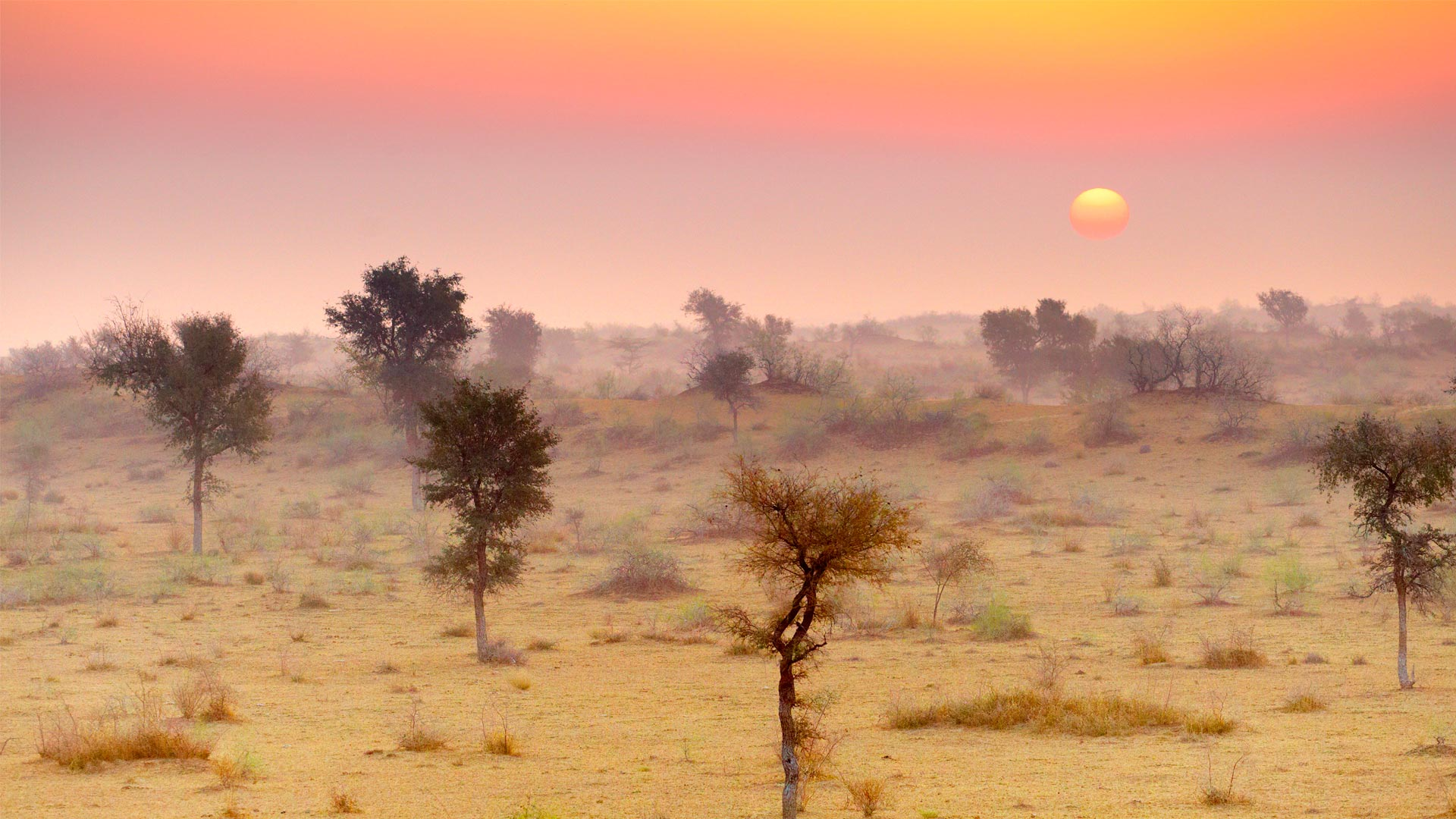 Thar Desert near Jaisalmer, Rajasthan, India (© Jan Wlodarczyk/Alamy Stock Photo)