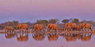 Elephants at Kruger National Park, South Africa (© Yva Momatiuk and John Eastcott/Minden Pictures)
