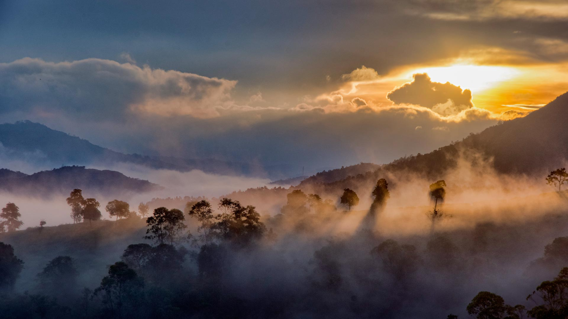 Mist over the forests of Idukki, Western Ghats, Kerala, India (© Getty Images)