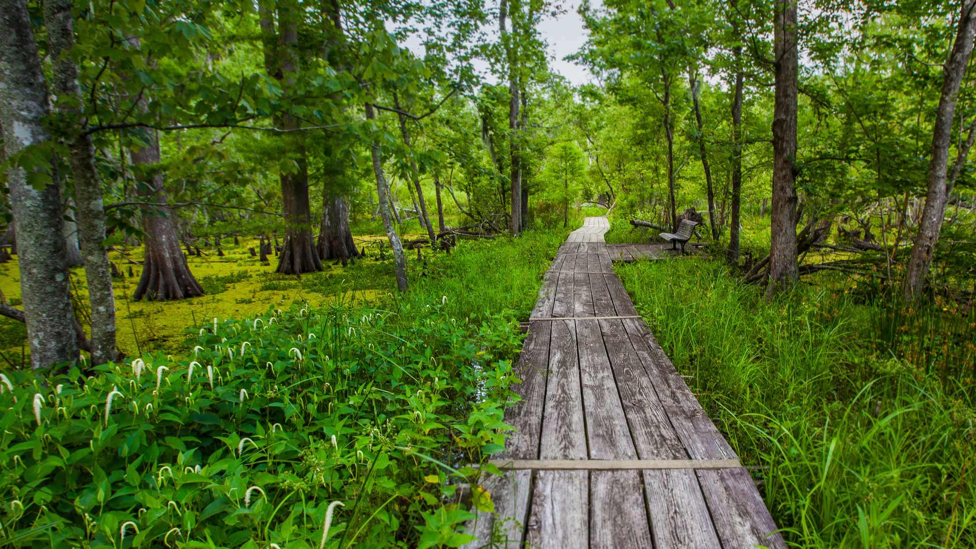 Barataria Trail, part of Jean Lafitte National Historical Park, Louisiana (© Karine Aigner/Tandem Stills + Motion)